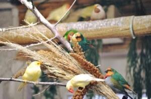 Kuşlarımdan Bazıları