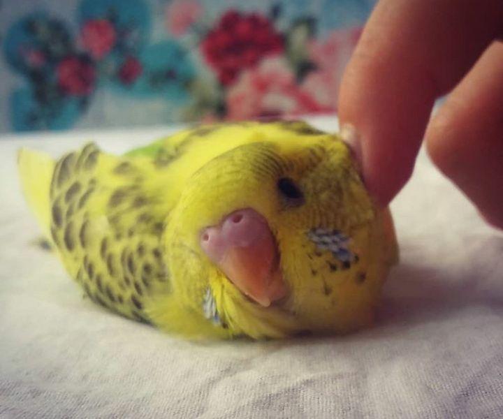 Kuşlarimin yavrusu